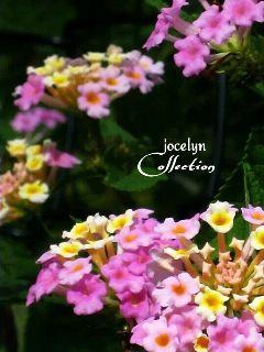 photography interesting nature flower photostory