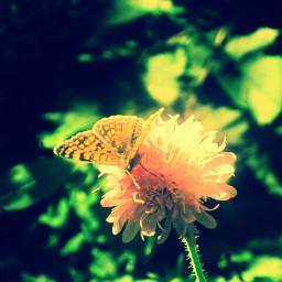 photography flower summer nature andorra
