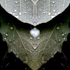 summer love nature rain dew