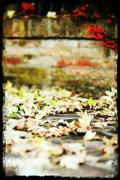 nature photography fall autumn leaf