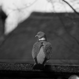 black & white photography pets & animals birds