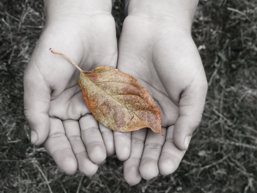 """""""Autumn is a second spring, when every leaf is a flower.""""  'Happy Autumn' :)"""