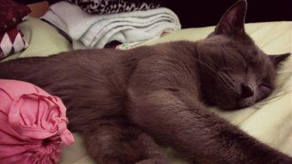 cute cat pets & animals sleepy adorable