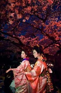 japan nature kimono cherry blossom geisha night