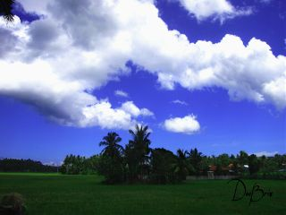 photography summer nature clouds brightday ricefield