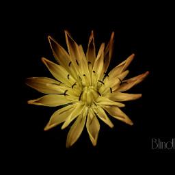canon nature macro flower minimal