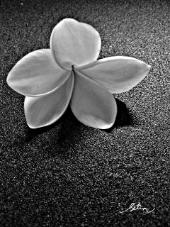 flower emotions black & white quotes & sayings photography