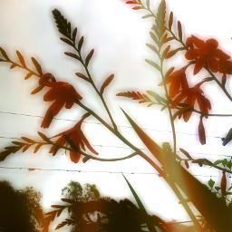 orange spring rain photography flower