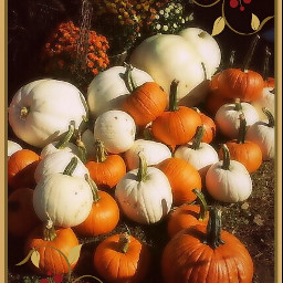 photography nature colorful pumpkins halloween edit challenge