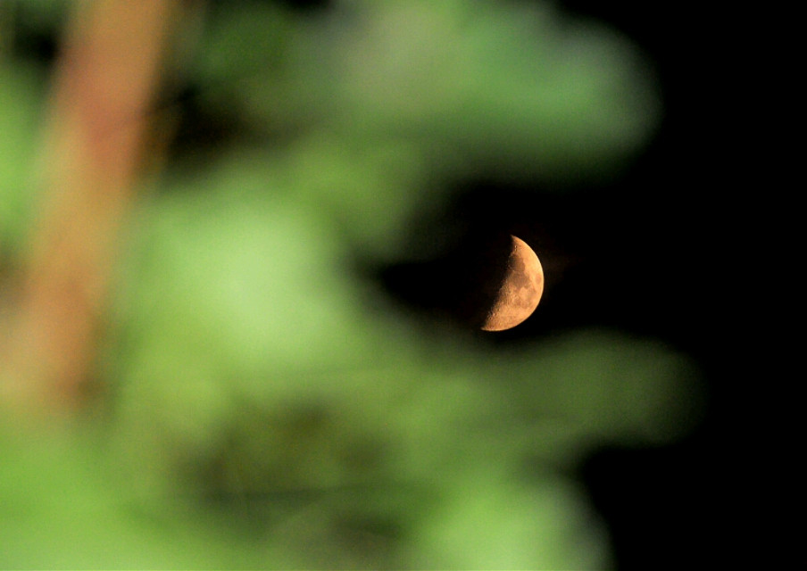 the tree in the foreground looks like the cookie monster about to devour the moon :)
