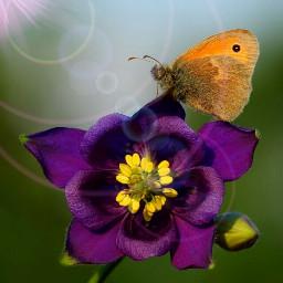 flower nature beautiful butterfly