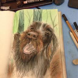 color splash pets & animals photography pencil art drawing dog