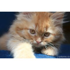kittens cute cats pets & animals love