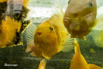 photography pets & animals nature fish smile