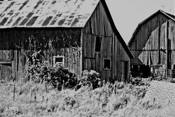 black & white architecture photography farm