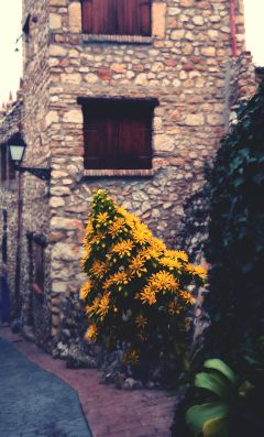 yellow flower mediterranean village