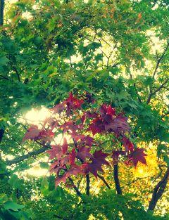 japan park autumn