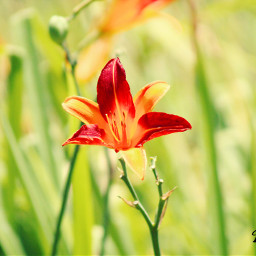 nature photography flower summer beautiful
