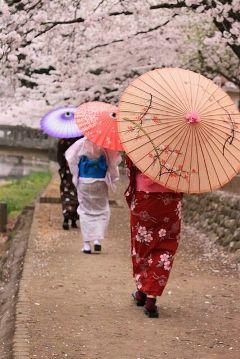 japan cherry blossom kimono beautiful