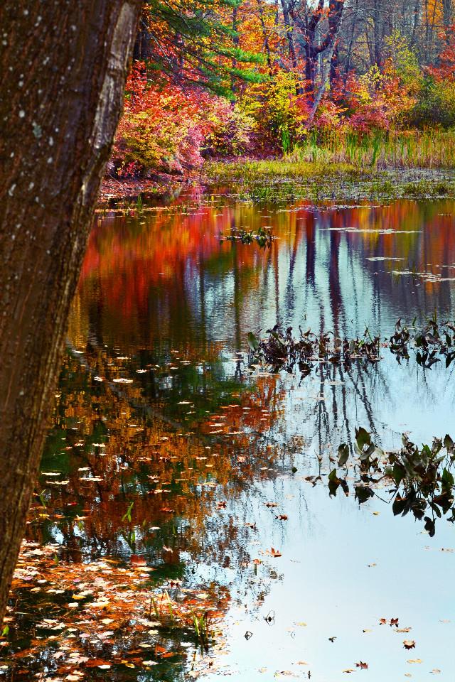 pond-er and reflect