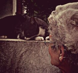 emotions pets & animals people